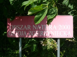 Obszar Natura 2000 - Ostoja Zgierzyniecka (fot. J. Kamieniecka)