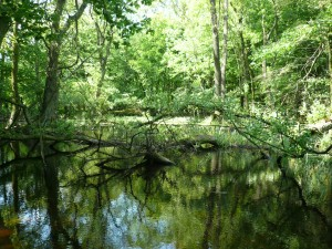 Uroczysko w Rezerwacie Wielki Las - Ostoja Zgierzyniecka (fot. J. Kamieniecka)